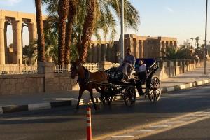 Adventures of Luxor and Makadi Bay